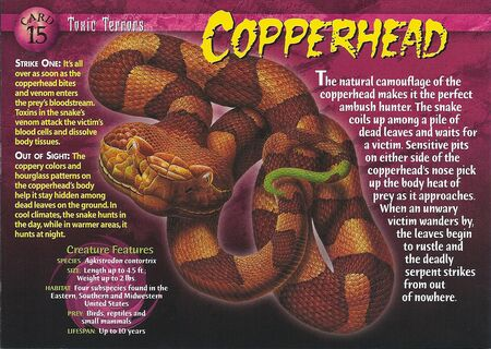 Copperhead front