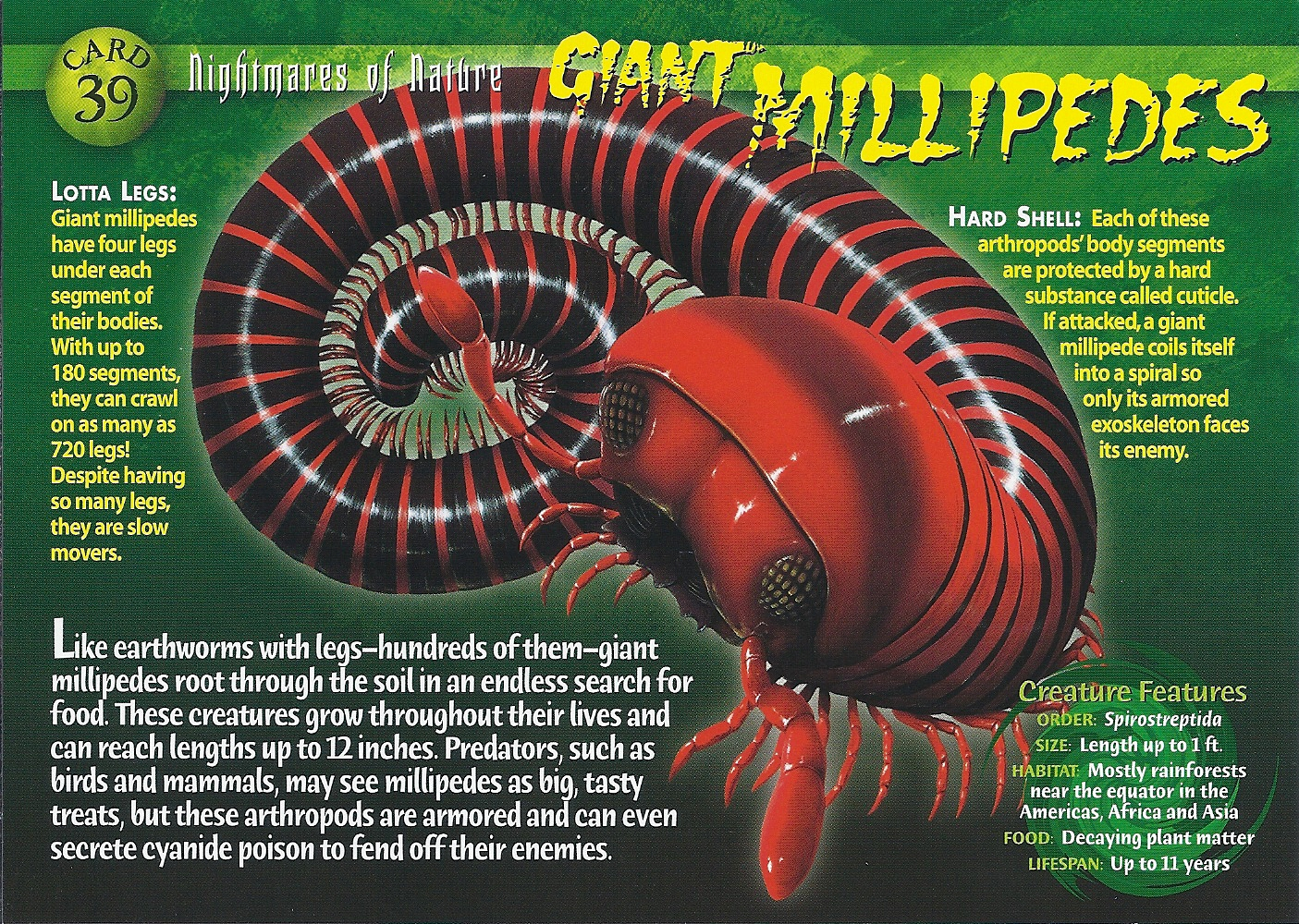 Giant African Spider Giant Millipede | Wier...
