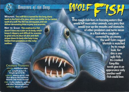 Wolf Fish front