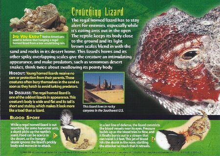 Regal Horned Lizard back