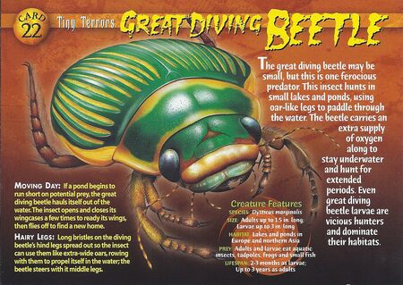 Great Diving Beetle front