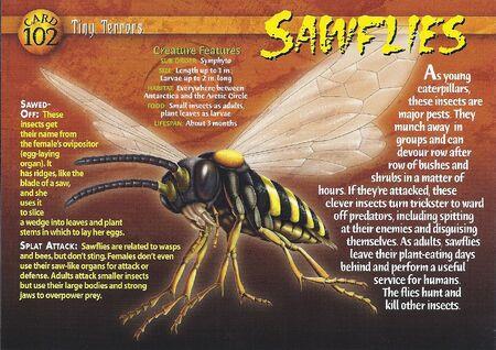 Sawflies front
