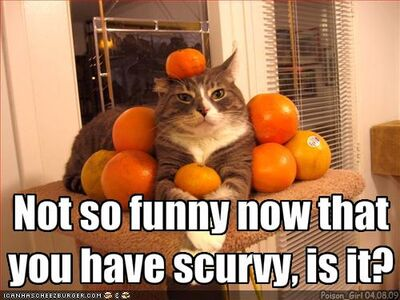Funny-pictures-cat-gives-you-scurvy