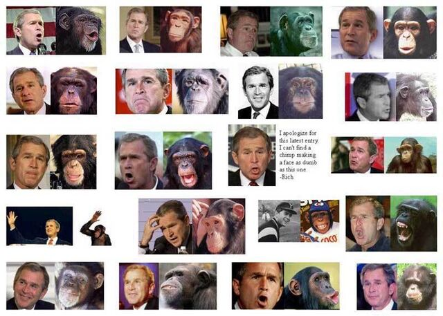 File:Bush chimps2.jpg
