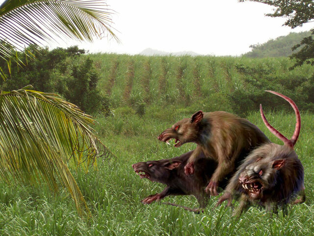 File:Giant cane rats.jpg