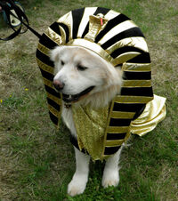 BOB DOG DAYS 2010 KING TUT (OP)