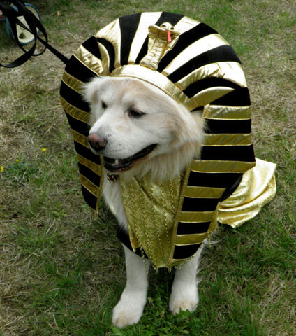 File:BOB DOG DAYS 2010 KING TUT (OP).jpg