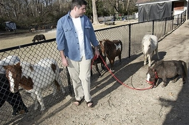 File:MiniatureHorse.jpg