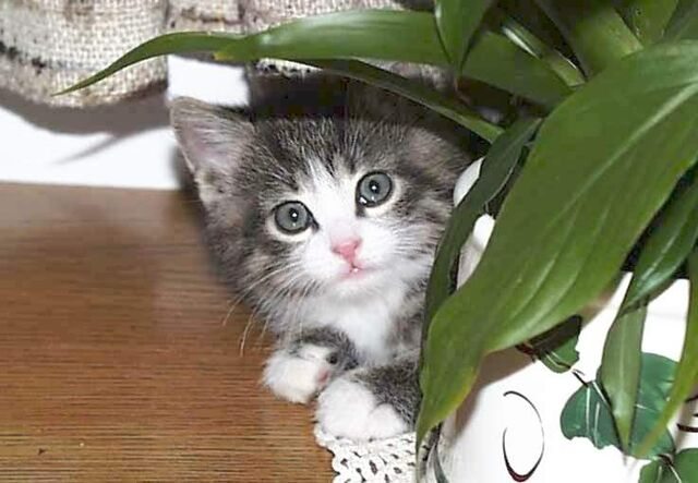 File:Young cat.jpg