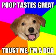 Advicedog1