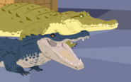 Wildkratts.crocogator.contest01