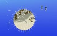 Blowfish.Wild Kratts.02