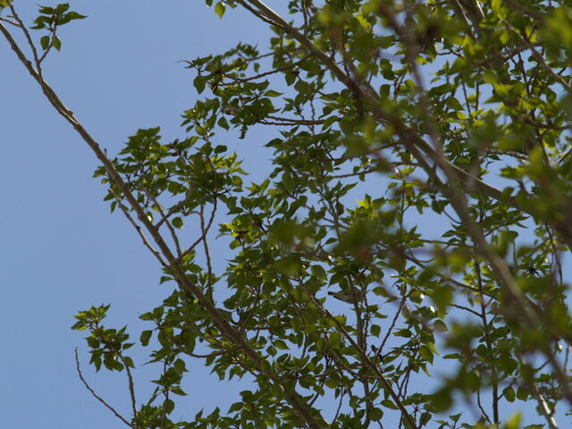 File:Unidentified bird.jpg