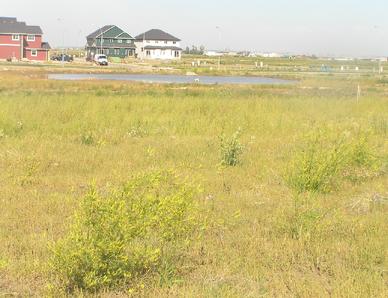 Habitat, Overgrowndrysoilmeadow