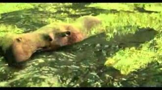 Wildlife Park - Release Trailer