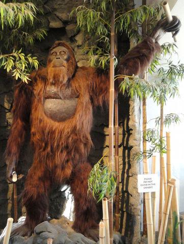 File:Gigantopithecus-blacki.jpg