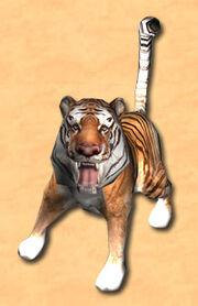 Tier tiger