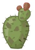 Cactus spoiled