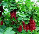 Reproducción vegetativa natural
