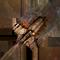 Tw2 weapon shovel