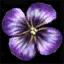 Substances Hellebore petals