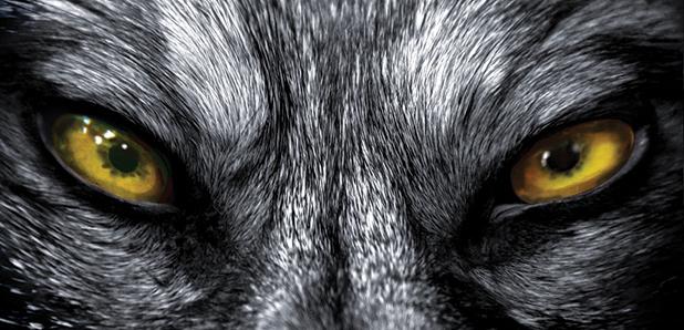 File:Images.list.co.uk wolf1-LST.jpg