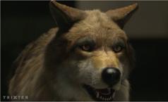 WB Wolf 7