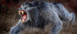 Kessler wolf