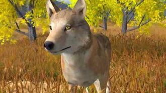 WolfQuest - Original Game Preview