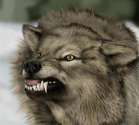 File:Angry wolf.jpg