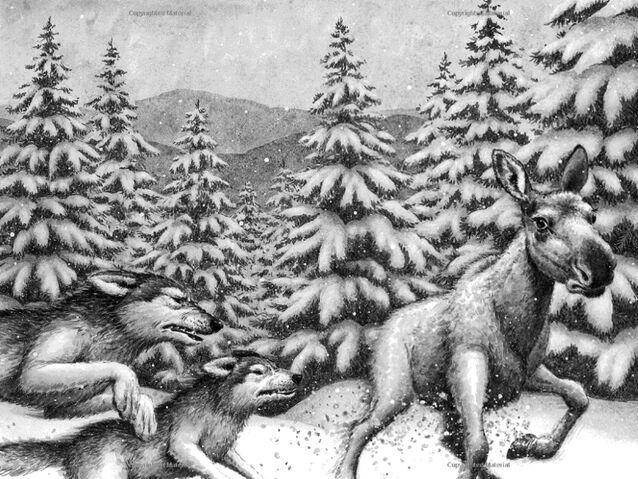 File:Frost Wolf 1.jpg
