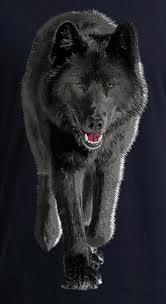 File:Aawolf6.jpg