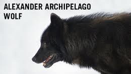 Aawolf