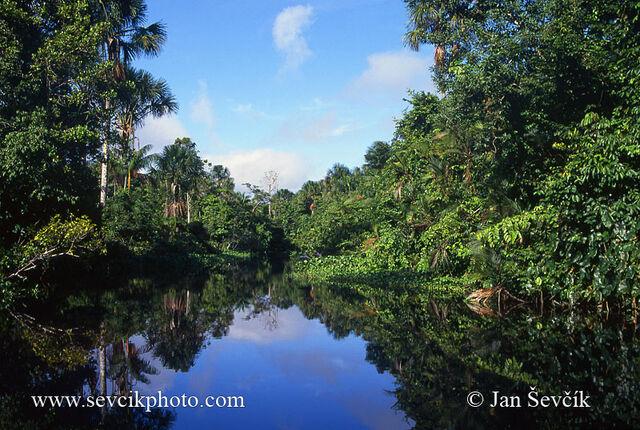 File:Orinoco-delta-river-3.jpg