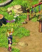 Common Grass 5