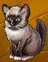 File:Collection-Siamese.png