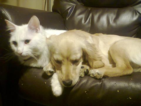File:Premium hund u Katze 57.JPG