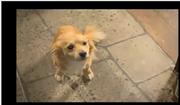 Kitty- hettie's dog