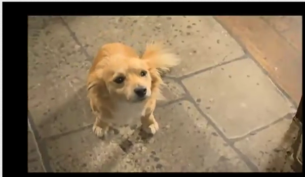 File:Kitty- hettie's dog.png