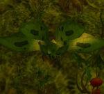 SwampMothWP