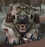 Rabid Grizzly