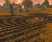 The Dead Acre