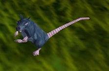Image of Wharf Rat
