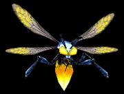 CapturedFirefly