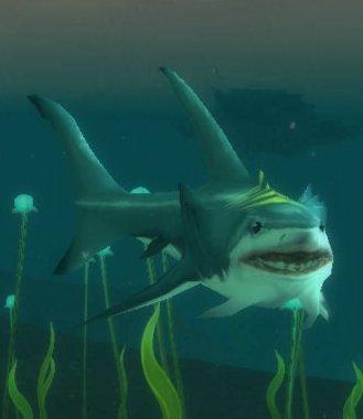 Cove Shark
