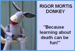 Rigor mortis donkey