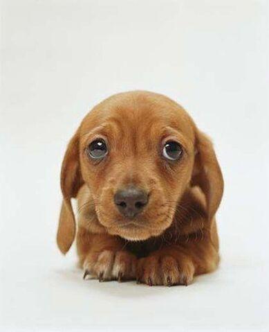 File:Sad puppy.jpeg