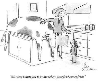 Newyorker cow