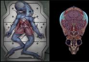 Wraith Autopsy