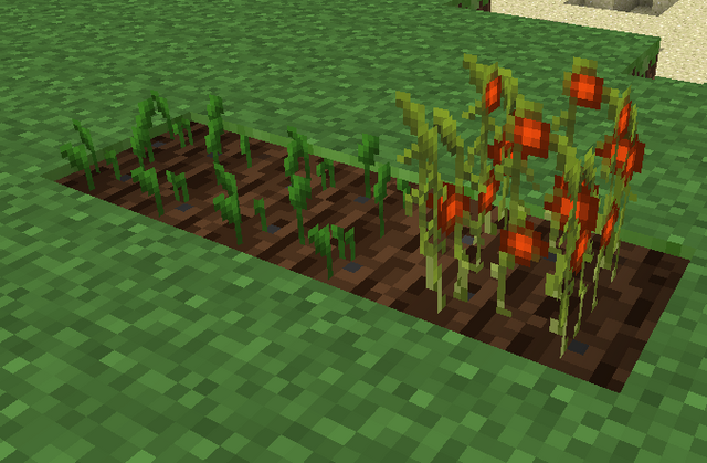 File:Tomato Plant.png